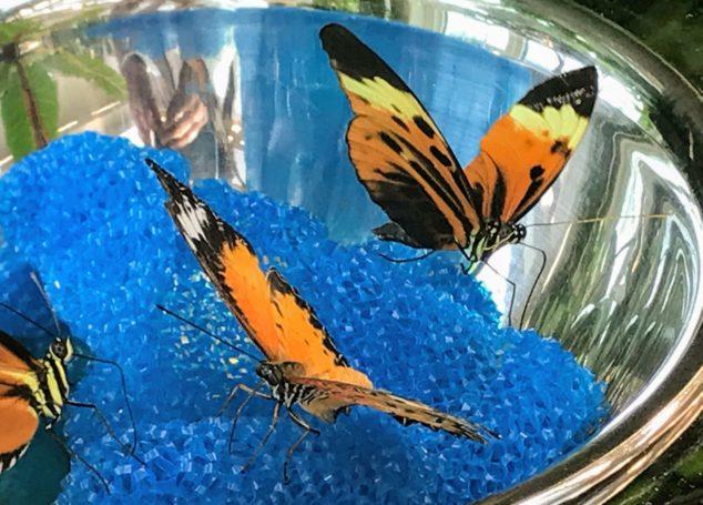 Hershey Butterfly Atrium