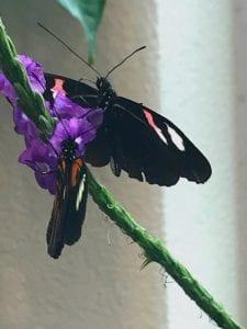 butterfly atrium