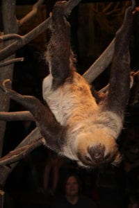 where to see a sloth?