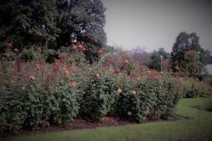 Hershey Garden Rose Gardens