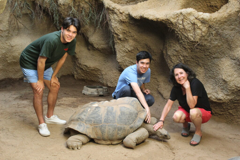 Meet the Reptiland Tortoises