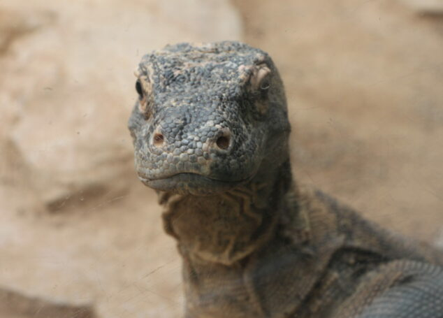 Reptiland: 7 Reasons To Visit Today