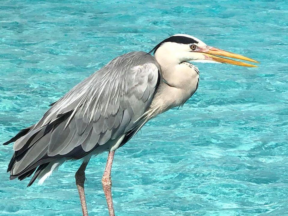 Exotic Maldives Wildlife