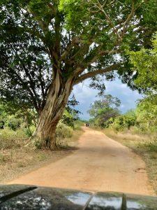 Romantic roads through Sri Lanka