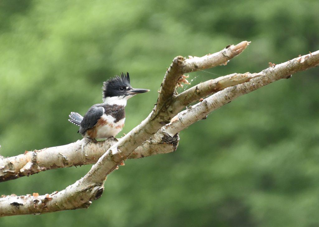 Birdwatching in NEPA